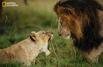 National Geographic contest pics