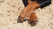 Hyderabad dog finalist in PETA contest