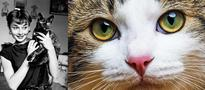 How Social Media Celebrated the International Cat Day