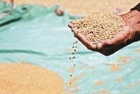 Lax digitisation of food subsidies