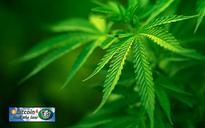 Teva to market cannabis inhaler; FDA makes quality metrics voluntary