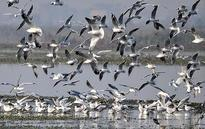Migratory birds draw bird enthusiasts to Okhla in big numbers