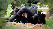 Uganda Tourism launches UK marketing push on Nat Geo Wild TV Channel