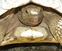 Madagascar nationals arrested at JKIA with tortoises