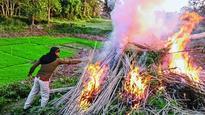 Ganja plants valued at Rs 1.5cr destroyed
