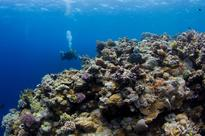 We've 'fried' the most pristine sections of Australia's Great Barrier Reef