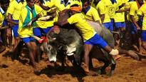 Madras High Court says it cannot direct Centre, Tamil Nadu to frame special law on jallikattu