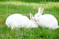 Cosmetics Industry and Animal Testing
