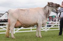 Great Yorkshire Show: Sheep, pig and dairy results