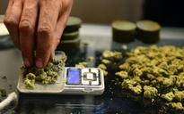 Canada's AG says amount of medical marijuana given Vets dangerous