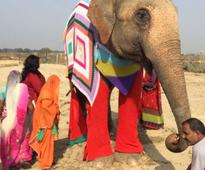 Indian Elephants Sport Colorful Knit Sweaters