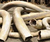 Interpol arrest warrant for ivory trade suspects