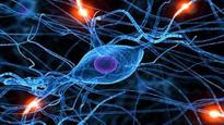 Scientists use magnets to recover forgotten short term memories
