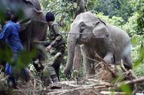 West Bengal seeks to capture wild elephants, not kill them