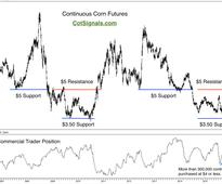 Are Corn-Based Stocks and ETFs a Safe Haven for a Market Downturn?