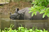 Chennai Lends A Helping Hand To Assam Works Towards Saving Rhinos And Sending Relief Material