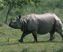 AGP demands protection for one-horned rhinos in Assam