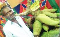 130 kg tapioca attracts visitors at agri expo in Kollam