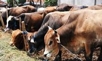 Kerala college students allege principal tricked them into eating beef