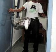 4.5 foot long Cobra rescued from Delhi farmhouse
