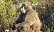 CT fires create flora & fauna crisis