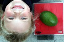 NZ@Noon: School harvests 280g feijoa