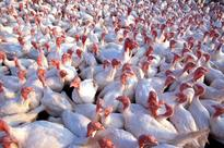 Product Recall: GNP Company Recalls More Than 55,000 Pounds Of Chicken Due To Possible Contamination