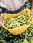 McLeod Russel sees flat tea output, better prices in 2017