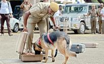 Dog Squads Roped in to Fight Poaching