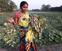 Malda: At an airport used by IAF helicopters, farmers cultivate produce right by the runway