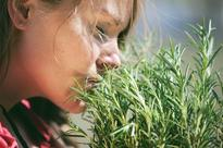 How To Improve Memory: Sniff Rosemary And Drink Peppermint Tea, Study Suggests