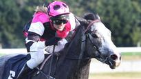 Night Nurse heading to St Leger for Pitman stable