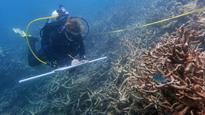 Northern Great Barrier Reef coral bleaching damage worse, surveys suggest