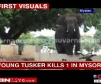 Elephants crush two to death in Jharkhand
