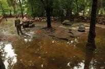 Hyd: Zoo animals fall sick as enclosures flooded