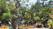Tree falling cases: South Mumbai locals take preventive steps