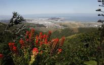 Drought gardening & wildflower walks