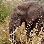 CITES meeting helps boost fight against illegal wildlife trade