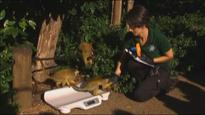 London zookeepers undertake monumental task of weighing and measuring animals