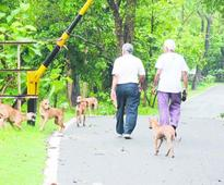 Canine alarm at Jubilee Park