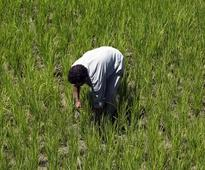 Farmer crisis: Are we a nation of dimwits and freeloaders unable to think beyond freebies?