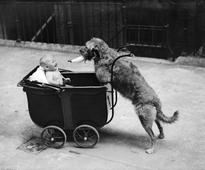 Hilarious vintage photos of cute pets