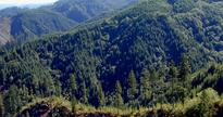 State of Oregon Announces Fair Market Value Of School Lands Within The Elliott State Forest: $220.8 Million