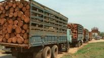 Andhra Pradesh red sanders team was following up cases
