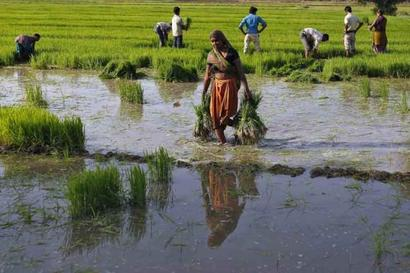 How govt plans to double farm income in 5 years