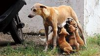 FIR filed against Noida society for throwing out newborn pups