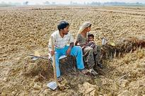 SBI ties up with Jain Farm to offer farmers loan against receivables