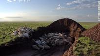 Saiga antelope deaths: Bacteria linked to catastrophic die-off in Kazakhstan