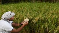 Cabinet clears decks for India-Poland agriculture pact