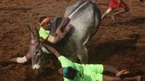 Jallikattu and Manjavirattu gets bloody, 3 killed in Tamil Nadu